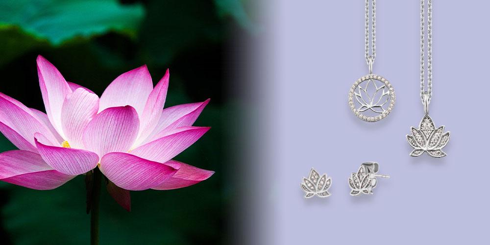 Engelsrufer Lotusblüte